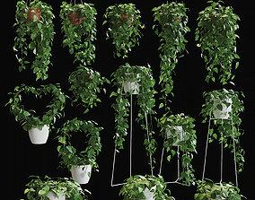 Scandens plant - Collection 3D model
