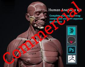 Human Anatomy Kit Commercial 3D model
