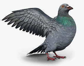 3D asset Pigeon Game Ready