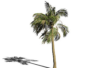 Palm Tree Animation 3D model