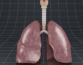 Anatomy lungs bronchi larynx 3D model