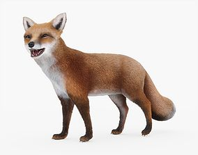 Fox Rigged with Fur 3D asset