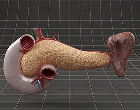 3D Anatomy pancreas duodenum spleen