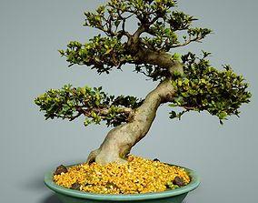 3D asset game-ready Bonsai Tree