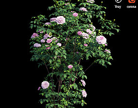 Rose plant set 55 red 3D model