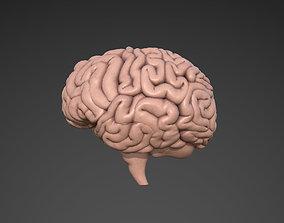 insides Brain 3D model