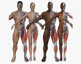 3d 3D model Ultimate Full Body Anatomy Collection
