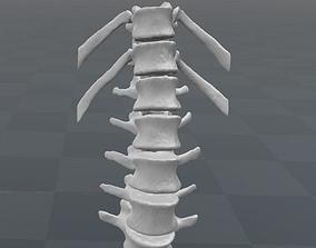 Vertebral column T11-L5 female - age 20 3D model