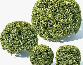 Buxus Sempervirens Nr9 Spherical 3D