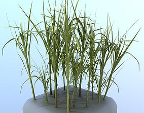 3D asset Sugar Cane