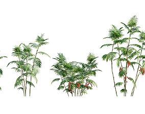 3D model Chamaedorea microspadix - Mexican Bamboo Palm -
