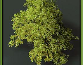 Tree - V03 3D