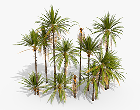 Phoenix Dactylifera Palm Tree 3D model