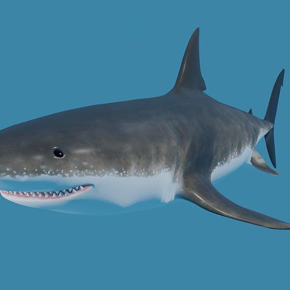 Shark - Tubarao