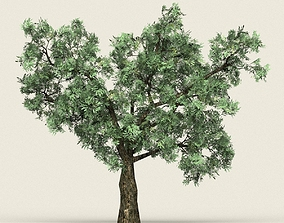 3D model Game Ready Forest Tree 20