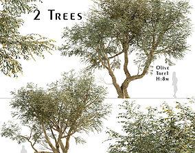 3D model Set of Olive or Olea Europaea Trees - 2 Tree
