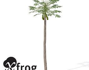 XfrogPlants Papaya 1 3D model