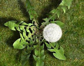 weed Dandelion animated 3D model