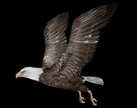 Eagle 3D model rigged