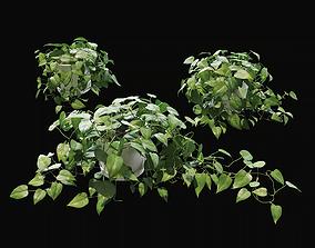 Scandens plant 1 3D model