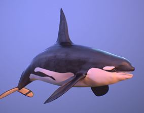 killer whale orca 3D model