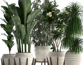3D collection of exotic plants in white pots 425