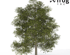 3D XfrogPlants Common Ash