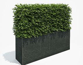 3D model Boxwood Hedge in Black Planter