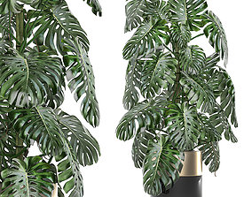 3D Monstera in a pot for the interior 708