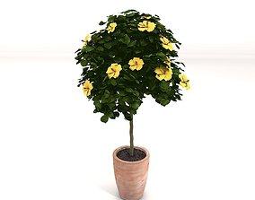 3D hibiscus tree - plant