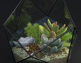 3D model Florarium decorative succulent echeveria sedum