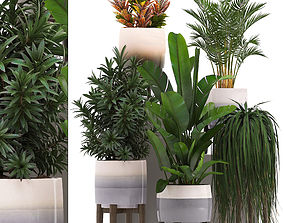 3D model Collection of exotic plants in pots 11