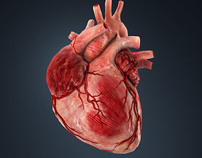 3D model Human heart human