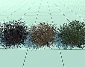 3D asset low-poly bush