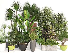 Plants 19 3D model bush