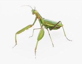 3D model Praying Mantis Rigged