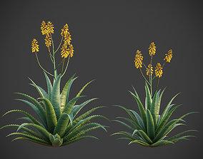 XfrogPlants Aloe Vera - Aloe Barbadensis 3D animated