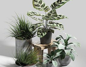 3D Set of plants 03