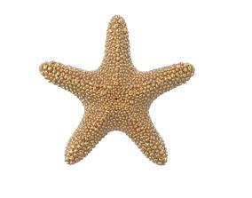 starfish pendant 3D model