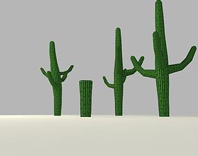 3D model Cactus low-poly