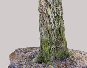 Tree Photoscan Low poly 3D asset