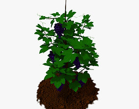 Cartoon Grape Plant 3D asset