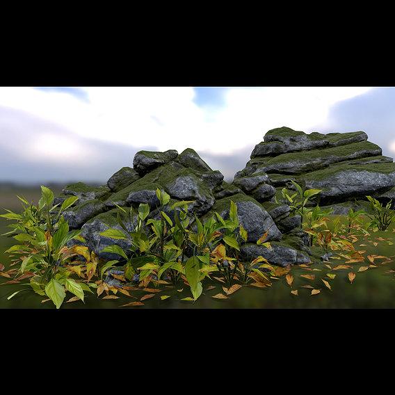 forest rocks