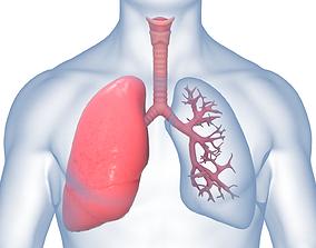 Respiratory System lobe 3D animated