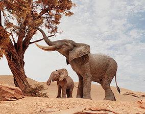 African Elephants 3D model