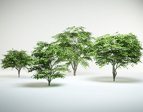 japanese maple set acer palmatum 3D model