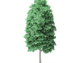 forest American Basswood Tree 3D Model 10m