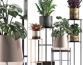 Collection of Exotic plants 3D