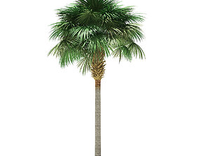Sabal Palm Tree 3D Model 9m