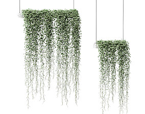 3D model Plants in hanging pots Vinca major